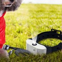 Peggybuy: Buy 4 Get 1 FREE on Pet Lover's Orders