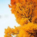 Ctrip: Upto 40% OFF on Autumn Escapes Japan / South Korea Bookings